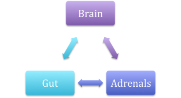 The Gut-Brain-Adrenal Triangle